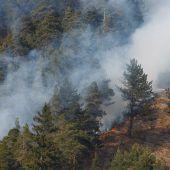 Ein Hektar Wald in Flammen