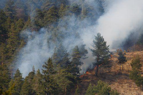 Rund 130 Feuerwehrmänner bekämpften im steilen Waldgelände den Brand, der aus bisher unbekannter Ursache ausgebrochen war. Hofmeister