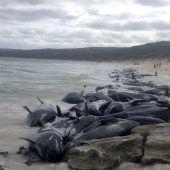 Mehr als 150 Wale an Australiens Westküste gestrandet