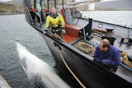 Am 10. Juni soll die Jagd auf Finnwale wieder beginnen. Reuters