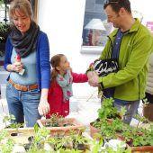 Jungpflanzenraritäten auf dem Schlossplatz