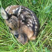 Kitzretter schützt Bambis vor Mähtod