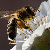 Guter Tag für die Biene