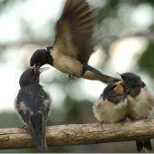 Die Frutz: Lebensader und Vogelparadies