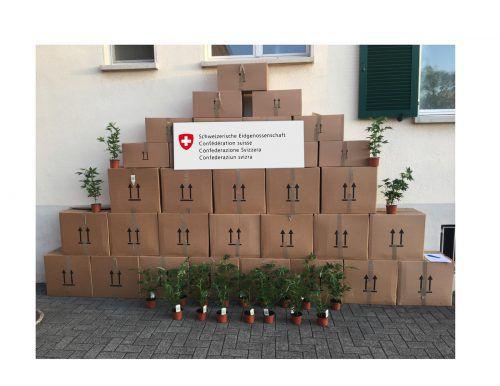 Die Pflanzen und der Chauffeur wurden für weitere Abklärungen der Kantonspolizei St. Gallen übergeben.Grenzwachtregion III