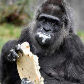Affengeburtstag im Zoo