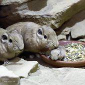 Kleine Nager