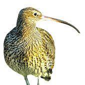 Schutz der Riedvögel
