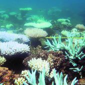 Korallen abgestorben