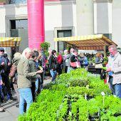 Dornbirner Innenstadt erblüht beim Gartentag