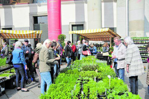 Für VN-Abonnenten gibt es beim Dornbirner Gartentag eine Robin Hood zum Preis von 7 statt 20 Euro.DornbirnTourismus&StadtmarketingKoju