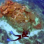 Millionen für Great Barrier Reef
