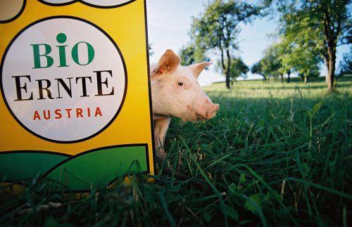 Natürliche Lebensbedingungen für Tiere gehören zur biologischen Landwirtschaft.