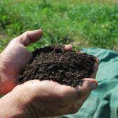 Kartoffelschalen und Rasenschnitt