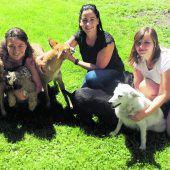Nachhaltiger Tierschutz braucht Kooperation