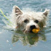 Morgens und abends dürfen Hunde baden