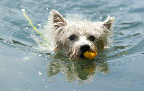 Zu bestimmten Zeiten dürfen Hunde nun im Alten Rhein planschen. VN/Hartinger