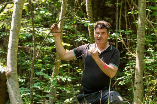 Andreas Amann bei einem seiner Kontrollgänge in den heimischen Wäldern. Die Eschen sind stark bedroht. Stiplovsek