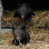 Kleine Bärenbrüder
