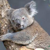 Entspannt im Baum