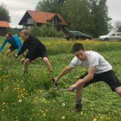 Schneller als der Rasenmäher