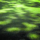 Schatten von Nachbars Bäumen