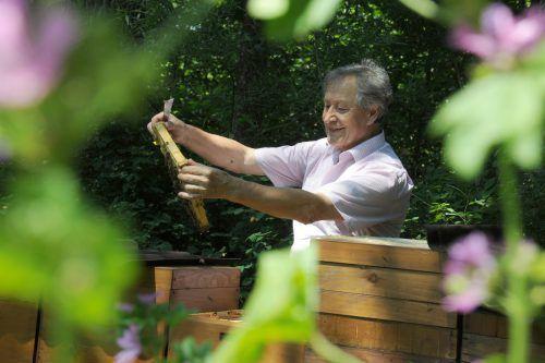 Imkermeister Anton Reitinger informiert in Bezau über die Bedeutung der Bienen.