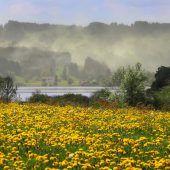 Die gelbe Blütenexplosion