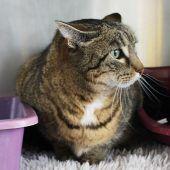 Katze Lotte ist sehr sensibel