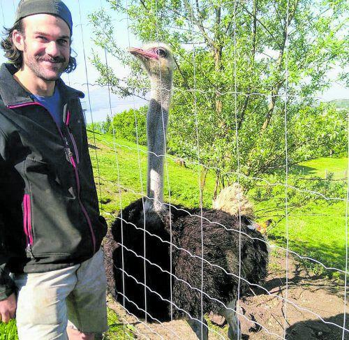 Neben Yaks, Schweinen, Hühnern und Gänsen tummeln sich bei Jessi und Luki auf dem Yak Halden Hof in Lochau auch Strauße.
