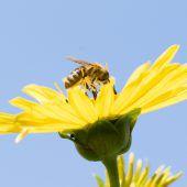 Die Folgen des Insektensterbens