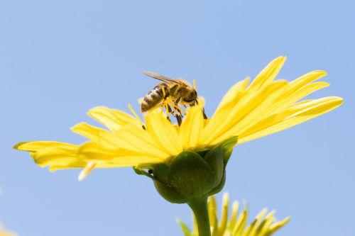 Ob Schmetterling, Biene, Heuschrecke oder Regenwurm – Insektenarten verschwinden aus Erde und Luft. Die Folgen werden heute beim gesellschaftspolitischen Stammtisch diskutiert.dpa