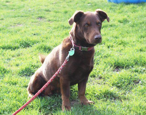 Wer gibt den Hunden Othello und Sally sowie Katze Phoebe und ihrem Partner Hank ein neues Zuhause?