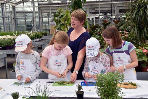 """Zusammen mit Cornelia vom Kräuternest kreierten die Kinder aus allerlei Kräutern ein """"Mut-Öl"""". Erlbenis Rankweil"""