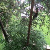 Besondere Baumpflege