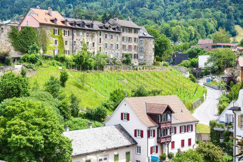Der neue Weingarten der Stadt Bregenz:Die erste Weinernte soll dann in drei Jahren erfolgen. Udo Mittelberger