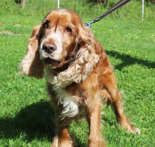 Ein neues Daheim für immer sucht das Tierschutzheim für die Hunde Chester (l. o.) und Knut (r. o.) sowie Kater Garfield und Wellensittich Max.