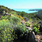 Korsika – sanft und störrisch