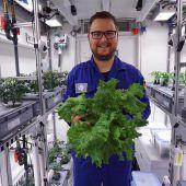 Forscher ernten kiloweise Gemüse in Antarktis-Gewächshaus