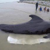Wal stirbt durch Plastikmüll im Magen
