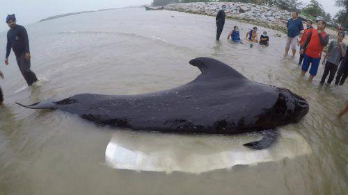 Plastikmüll wird immer mehr zur Bedrohung der Meerestiere. afp