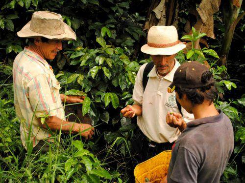 Seit 1993 arbeitet das Klimabündnis mit Chocó an der Umsetzung gemeinsamer Ziele. Gemeinde