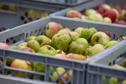 Vorarlbergs Spitäler wollen mehr regionale Bioprodukte anbieten. Das ist oft gar nicht so einfach. VN/Sams