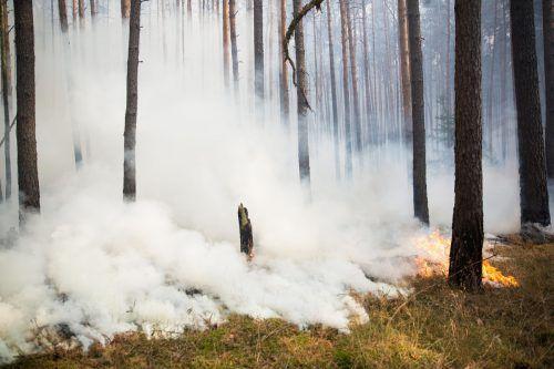 Bei Potsdam waren die Flammen am Freitag unter Kontrolle. AFP