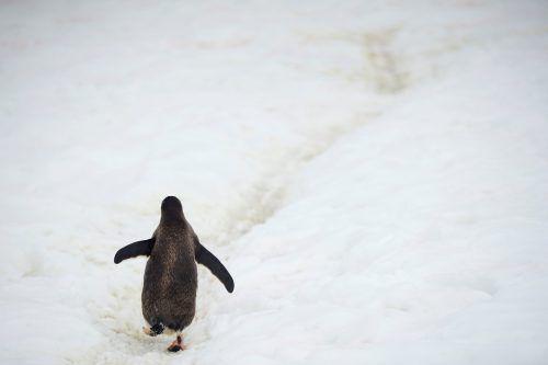 Der kälteste Ort der Erde ist noch kälter als bisher gedacht. Reuters