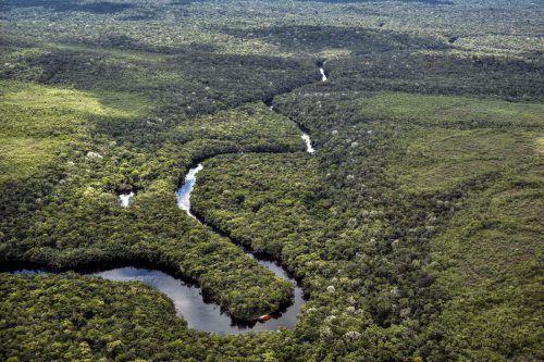Der Park ist Heimat von gefährdeten Arten wie Jaguar, Rosa-Flussdelfin und Tapir. APA