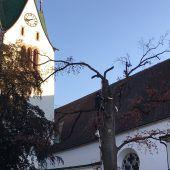 Kranke Bäume beim Feldkircher Dom gefällt