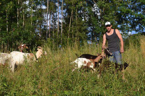 Die Ziegen von Guntram Schwendinger sind als Rekultivierer aktiv. EM