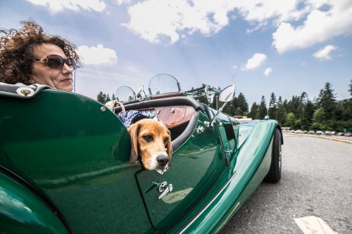 Ein wunderbarer Tag für Frauchen, Hund und die prächtige Karosse. Die Oldtimer-Ausfahrt für den guten Zweck wurde zu einem vollen Erfolg. VN/Sams