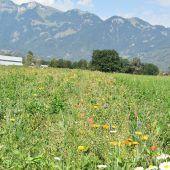 Zusätzliche Blüh-Flächen im Weitried in Rankweil